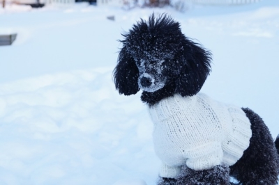 Dog in Sweater During Winter