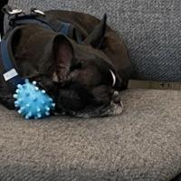 Izzy - Fav Blue Toy