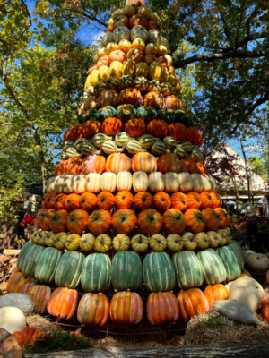MEDiAHEAD - Happy Thanksgiving!