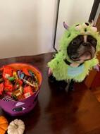 MEDiAHEAD - Happy Halloween - Izzy