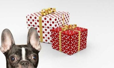 Happy Holidays from Izzy