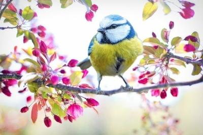 Spring Bird Watching